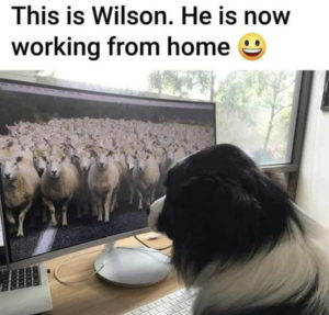dog-working-from-home-meme